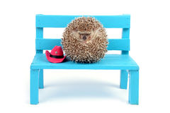 Hedgehog ball on a chair. Stock Images