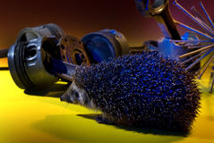 Hedgehog with blue lighting Stock Image