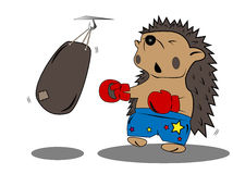 Hedgehog boxer Stock Image