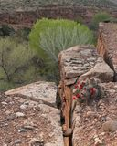 A hedgehog cactus with bright red flowers on the edge of a split in the sandstone cliff with pale green cottonwood trees in the ba. A hedgehog cactus with bright Stock Image