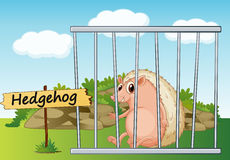 Hedgehog in cage Royalty Free Stock Photography