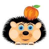 Hedgehog carries apple Stock Image