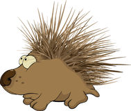 Hedgehog. Cartoon. Small kind hedgehog from wood Royalty Free Stock Photos