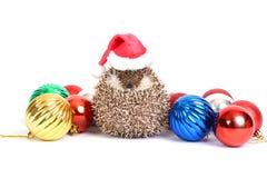 Hedgehog celebration. Stock Image