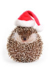 Hedgehog with christmas item. Royalty Free Stock Images
