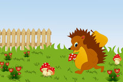 Hedgehog collect food. Royalty Free Stock Photo