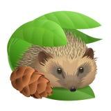 Hedgehog with a cone Stock Photos