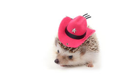Hedgehog with cowboy hat. Royalty Free Stock Images