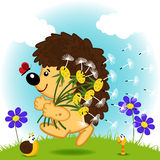 Hedgehog with dandelions Stock Photo