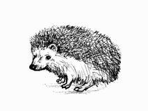 hedgehog Disegno realistico Immagine Stock
