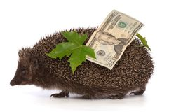 Hedgehog with dollars profit Royalty Free Stock Photos
