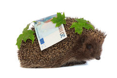 Hedgehog with dollars profit Royalty Free Stock Image