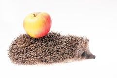 Hedgehog e maçã Imagem de Stock Royalty Free