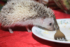 Hedgehog and an empty dinner plate Stock Image