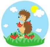 Hedgehog engraçado Foto de Stock Royalty Free