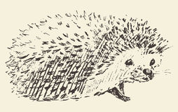 Hedgehog engraving style vintage drawn sketch Royalty Free Stock Photos