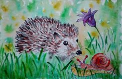 Hedgehog, Erinaceidae, Fauna, Domesticated Hedgehog Royalty Free Stock Images