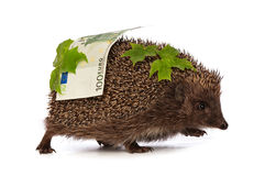 Hedgehog with euro profit Royalty Free Stock Image
