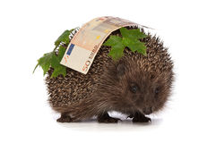 Hedgehog with euro profit Royalty Free Stock Photos
