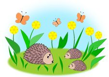 Hedgehog Family Royalty Free Stock Image