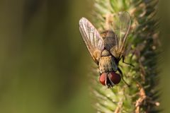 Hedgehog fly on the grass Stock Photography