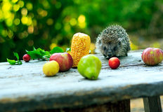 Hedgehog among fruits Stock Photography