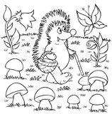 Hedgehog gathers mushrooms Stock Photo