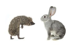 Hedgehog and gray rabbit Royalty Free Stock Photo