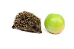 Hedgehog with green apple Royalty Free Stock Photography