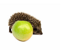 Hedgehog with green apple Stock Photography