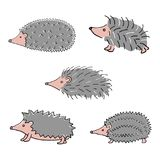 Hedgehog hand drawn Royalty Free Stock Photo