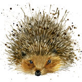 Hedgehog illustration with splash watercolor textured background. Hedgehog T-shirt graphics, hedgehog illustration with splash watercolor textured background