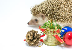 Hedgehog isolate on white background Royalty Free Stock Image