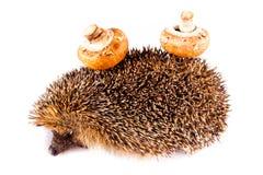 Hedgehog isolated on white background postcard mushroom Stock Photos