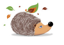 Hedgehog with leaves Stock Images
