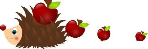 Hedgehog losing apples Stock Photos