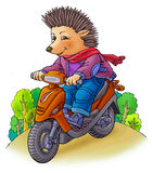 Hedgehog on a motorcycle. The prickly hedgehog ride on a motorcycle Royalty Free Stock Photo