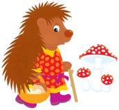 Hedgehog mushroomer Royalty Free Stock Images