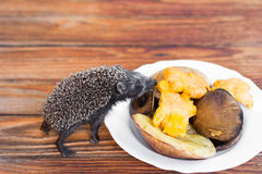 Hedgehog and mushrooms Stock Images