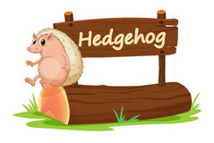 Hedgehog and name plate Stock Photography