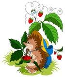 Hedgehog novo bonito Imagens de Stock