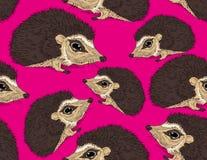 Hedgehog pink Stock Images