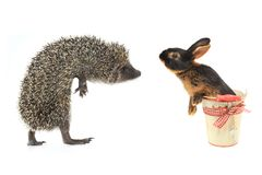 Hedgehog and rabbit Stock Photography