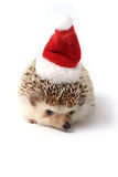 Hedgehog ready for Christmas celebration. Stock Photography