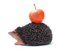 Hedgehog with red apple Stock Image