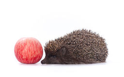 Hedgehog and red apple on white Royalty Free Stock Photos