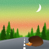 Hedgehog on the road Royalty Free Stock Image