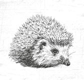 Hedgehog. See also the other sets of animals. Stock Image