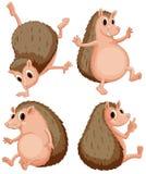 Hedgehog set Stock Photography