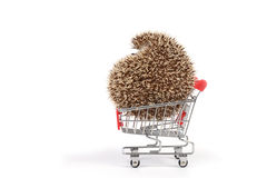 Hedgehog in shopping cart. Royalty Free Stock Photo